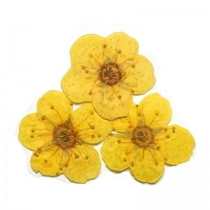 ดอกไม้แห้งเหลือง