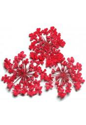 ดอกไม้แห้งพุ่มแดง