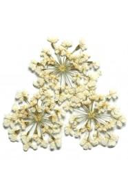 ดอกไม้แห้งพุ่มขาว