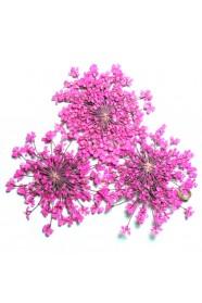 ดอกไม้แห้งพุ่มชมพู
