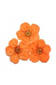 ดอกไม้แห้งส้ม