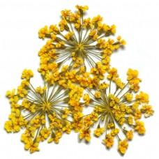 ดอกไม้แห้งพุ่มเหลือง
