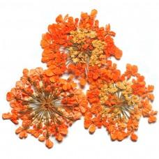 ดอกไม้แห้งพุ่มส้ม