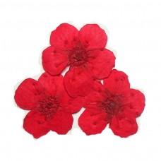 ดอกไม้แห้งแดง